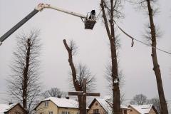 drzewa_sól_luty-10