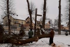 drzewa_sól_luty-11