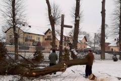 drzewa_sól_luty-12