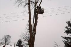 drzewa_sól_luty-13
