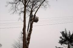 drzewa_sól_luty-14