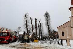 drzewa_sól_luty-17