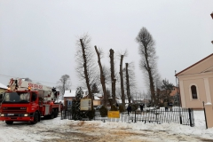 drzewa_sól_luty-18