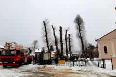 drzewa_sól_luty-19