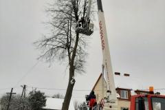 drzewa_sól_luty-2
