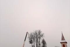 drzewa_sól_luty-4