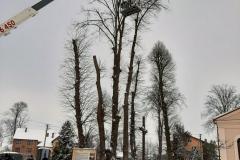 drzewa_sól_luty-8