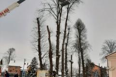 drzewa_sól_luty-9